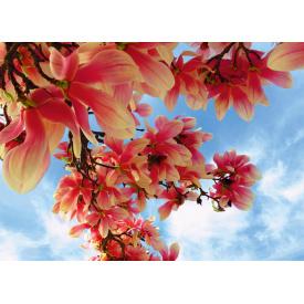 Фотообои Престиж Цвет магнолии №47