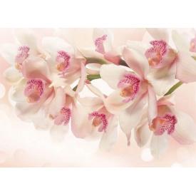 Фотообои Престиж Ветка орхидеи №67