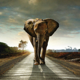 Фотообои Престиж Слон №28