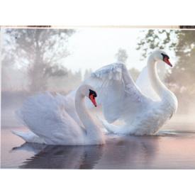 Фотообои Престиж Лебеди №27