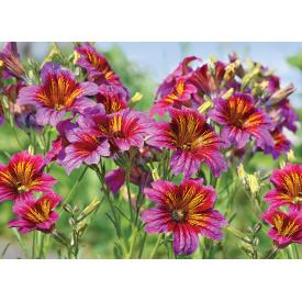 Фотообои Престиж Луговые цветы №56