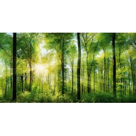 Фотообои Престиж Лес №26