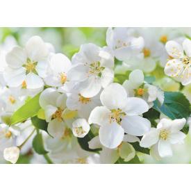 Фотообои Престиж Цветущая яблоня №10