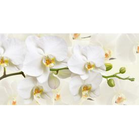 Фотообои Престиж Белая орхидея №49