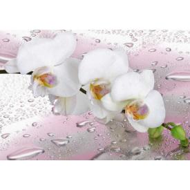 Фотообои Престиж Белая орхидея №64
