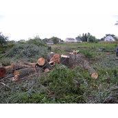 Срезание деревьев и кустарников