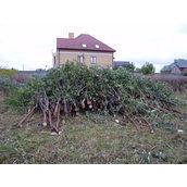 Розчищення ділянки від дерев та кущів