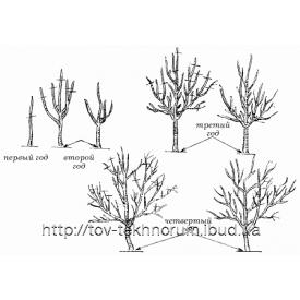 Обрізка садових дерев