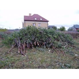 Расчистка участка от деревьев и кустов
