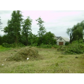 Спиливание дерева на участке