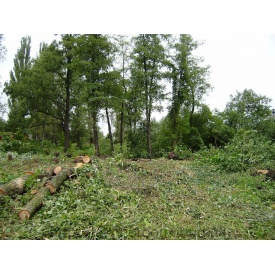 Різка дерев на ділянці