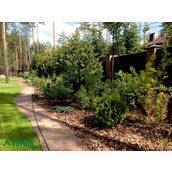 Озеленення території заміського будинку