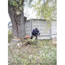 Видалення аварійного дерева
