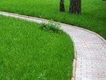Вариант дизайна газона