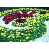 Создание уникальных цветочных клумб