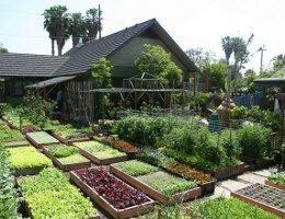 Пришла жара: Как правильно поливать растения на огороде