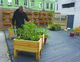 В центре Киева появился огород, для финансирования которого киевляне собрали 78 тысяч гривен!