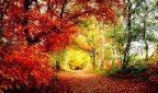 Как отопить дом опавшими листьями