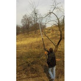 Кронування та обрізка дерев