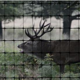 Сетка для ограждения животных и птиц Cintoflex D 21x34 мм 2x100 м черная