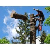 Удаление дерева полностью по частям
