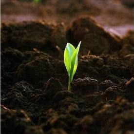 Грунт растительный чернозем навалом