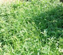 Сорняки — борьба с сорняками