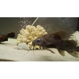 Грунт кварцевый для аквариума 2-5 мм