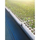 Касета для розсади томатів КТ-260 517х325х63 мм