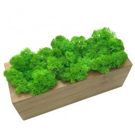 Стабілізований мох SO Green в дерев'яному кашпо 20×8 см (031)