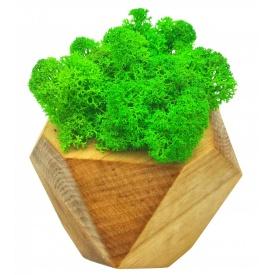 Стабілізований мох SO Green в дерев'яному кашпо шестигранному 7×7 см (022)