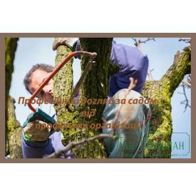 Обрізка плодових дерев і догляд за садом
