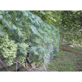 Сетка полимерная от града TENAX зеленая