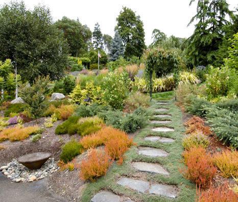 Рослини, кущі, дерева для саду