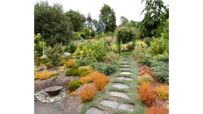 Растения, кусты, деревья для сада