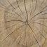 Как выбрать древесину?
