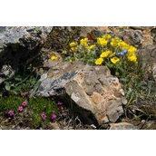 Создание альпийских горок