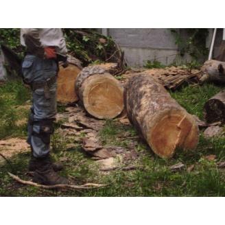 Валка деревьев на участке