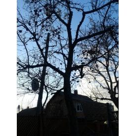 Обрізка дерев у саду