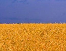 Украина резко поднялась в рейтинге стран по развитию человеческого потенциала!