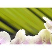 Плитка керамическая BELANI Панно Орхидея 2 35х25 см фисташковый