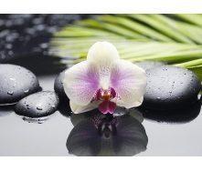 Плитка керамическая BELANI Декор Орхидея 2 35х25 см фисташковый