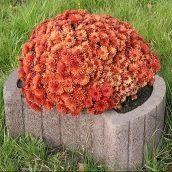 Цветочница круглая Золотой Мандарин 660х450х250 мм на сером цементе коричневый