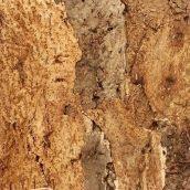 Настінний корок Wicanders Dekwall Exotic Horta 600х300х3 мм
