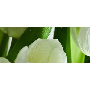 Плитка АТЕМ Yalta Tulip Maxi 3 W 200х500 мм