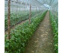 Сітка шпалерна Hortinet 170x150 мм 1,7x500 м зелено-біла