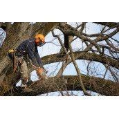 Удаление дерева полностью с использованием оттяжки