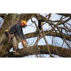 Видалення дерева цілком з використанням відтяжки