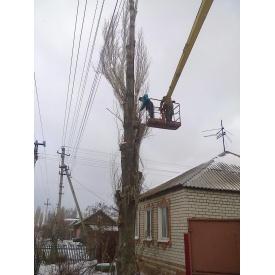 Удаление дерева полностью с помощью автовышки