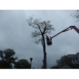 Обрезка аварийных деревьев с автовышки